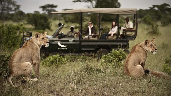 Game Drive - Game Drive at klein's Camp
