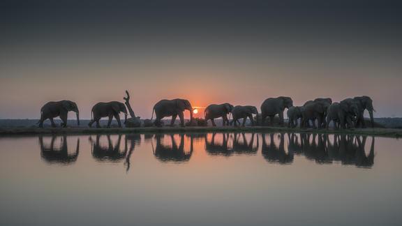Jabulani Elephants -