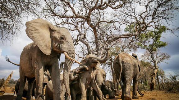 Jabulani Safari Elephants -