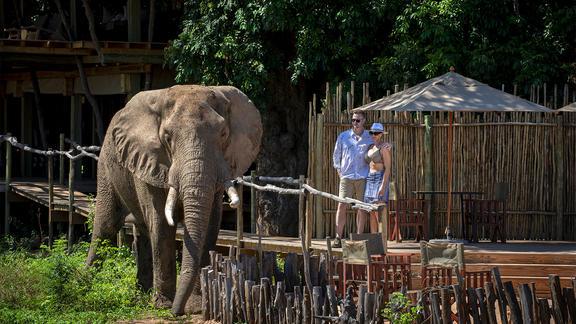 Nyamatusi Camp - A close encounter