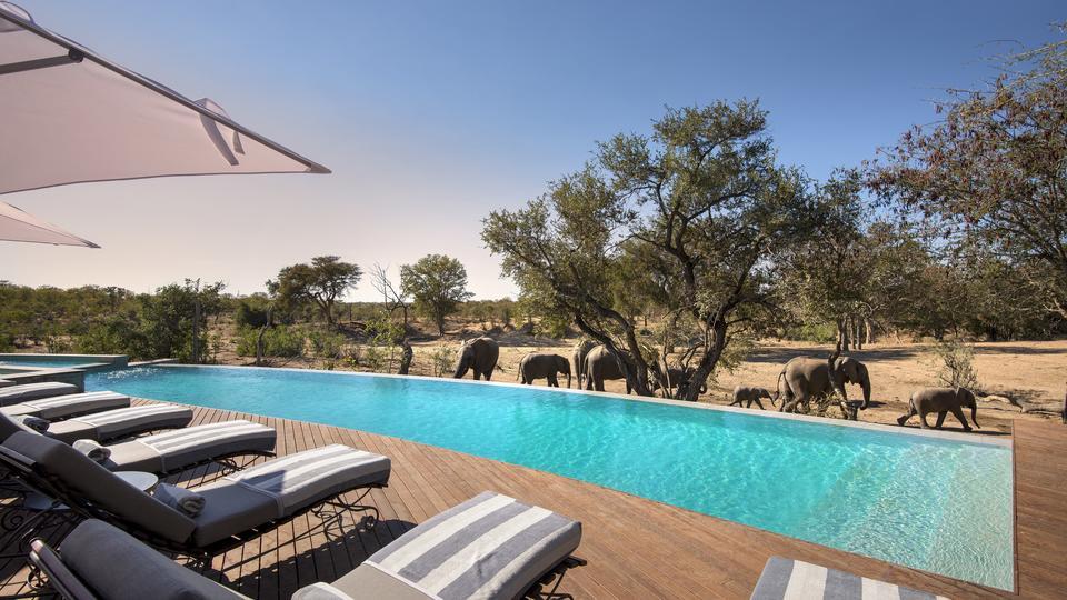 andBeyond Ngala Safari Lodge - Lodge Pool